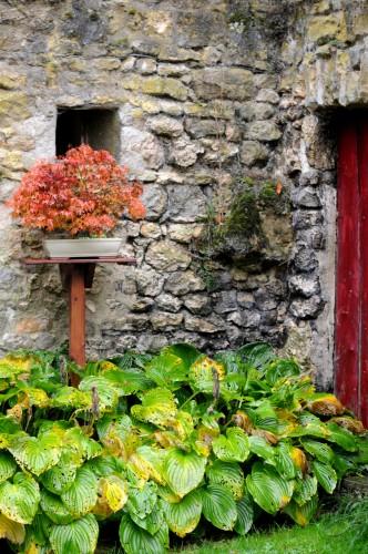 jardin-automnal