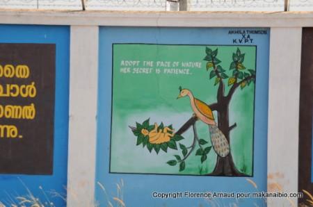 """""""Adopter le pas de la nature, son secret est la patience"""", Kérala, Inde, Février 2011"""
