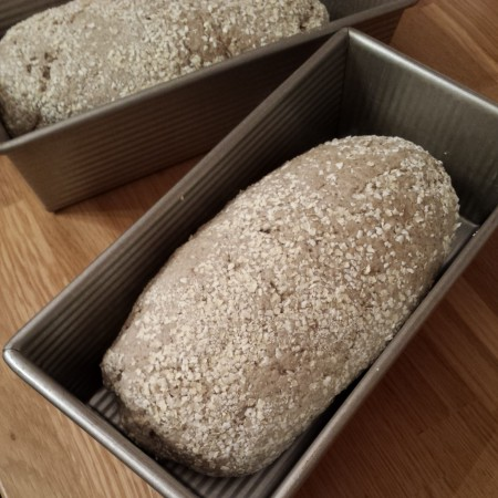 La pâte à pain au levain sans gluten a été moulée