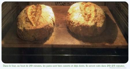 Pains aux graines 100% farines SG, enfournés depuis 20 minutes, déjà bien ouverts - Makanaibio.com