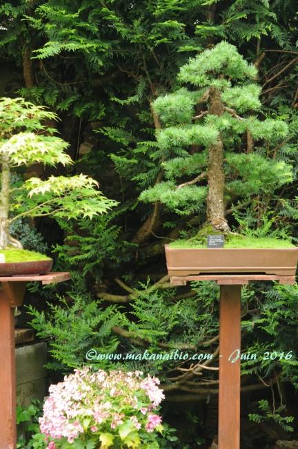 Jardin Juin 2016 (15)