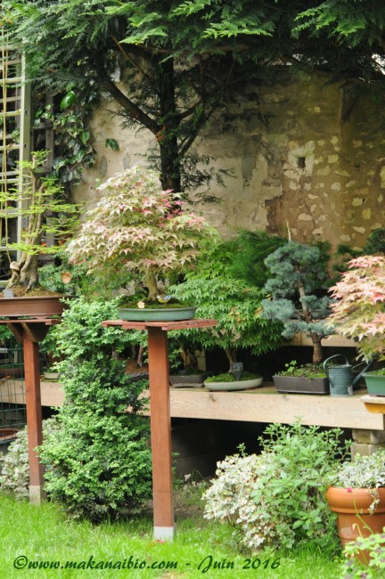 Jardin Juin 2016 (16)