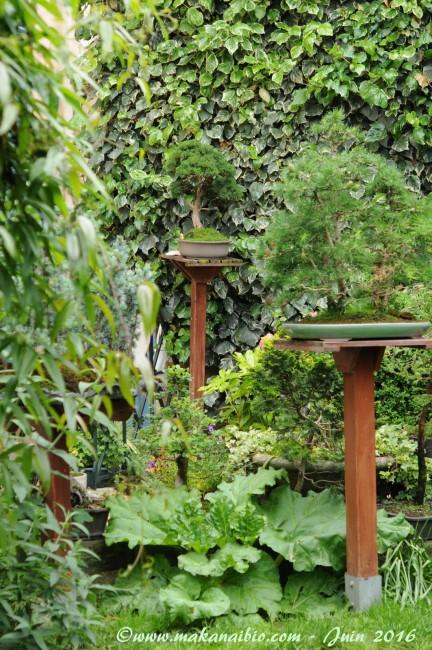 Jardin Juin 2016 (18)