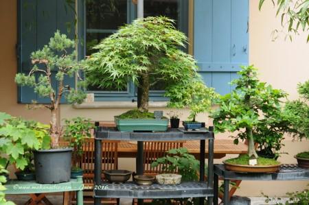 Jardin Juin 2016 (19)