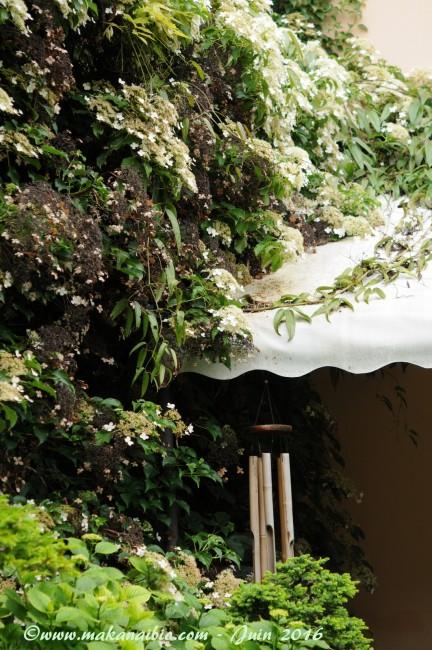 Jardin Juin 2016 (23)