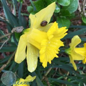 Jardin mars 2017 @Makanaibio.com-34
