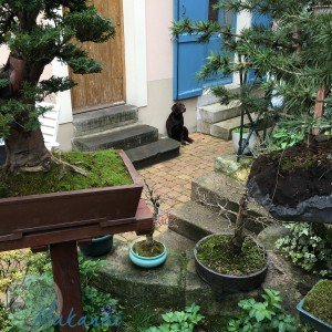 Jardin mars 2017 @Makanaibio.com-38