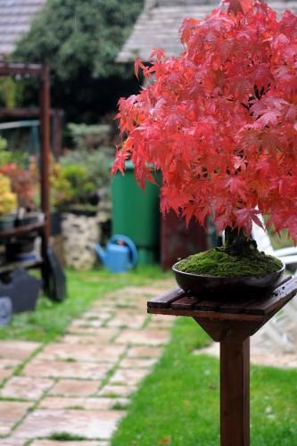 jardin-automnal3