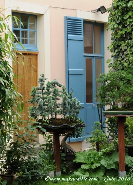 Jardin Juin 2016 (20)