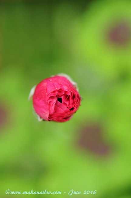 Jardin Juin 2016 (8)