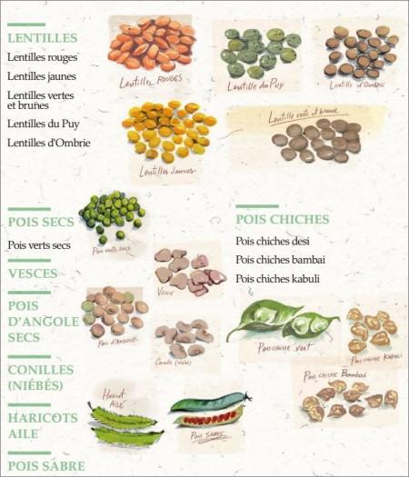 Très jolies illustrations du guide Légumineuses de la FAO